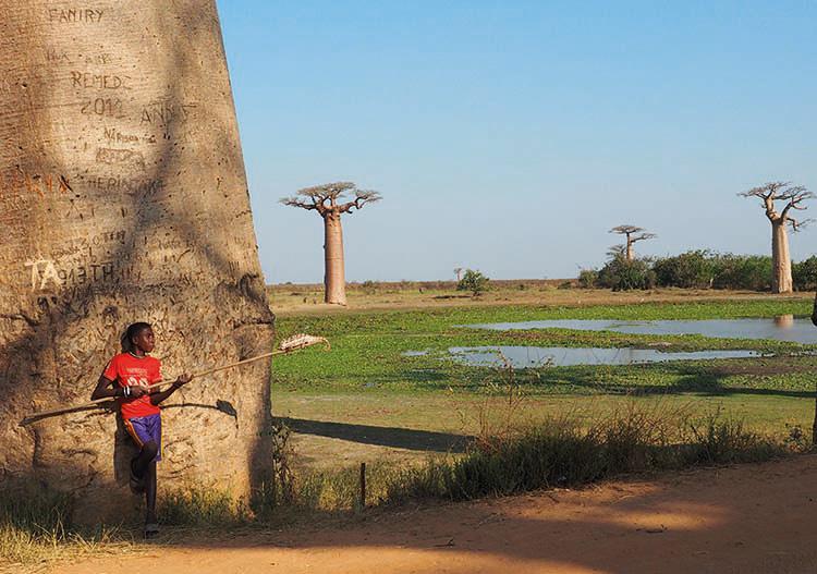 Alle de Baobab Morondave